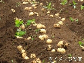 静岡県浜松市×露地野菜/個人【35655】-top