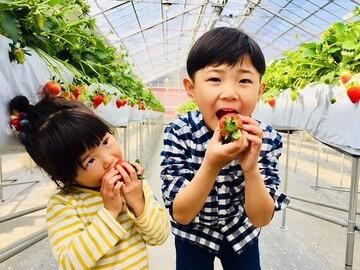 SweetDiary株式会社-top