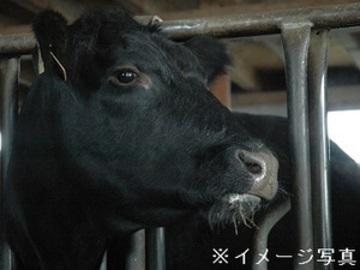 北海道・山形県×肉牛(肥育)/法人【32367】-top