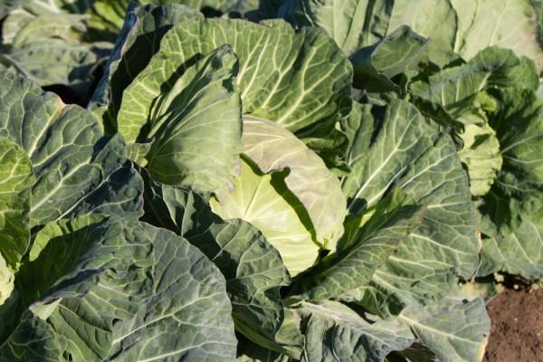 一番身近な新鮮野菜
