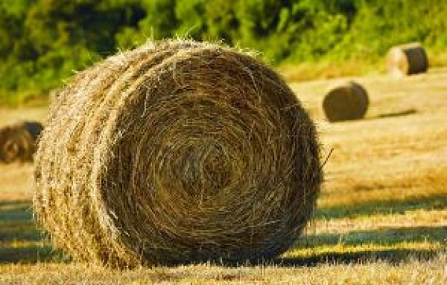 bale-of-hay_21223147
