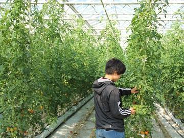 まっ赤なトマト工房-2