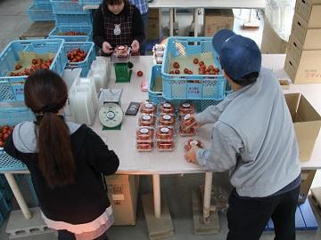 まっ赤なトマト工房-4