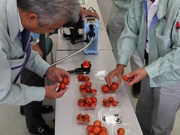 まっ赤なトマト工房-6