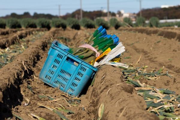 日本の食生活の変化と農業