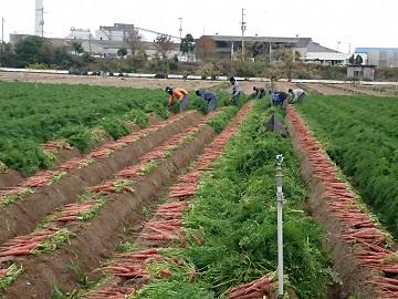 町川農園-2