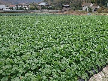 町川農園-6