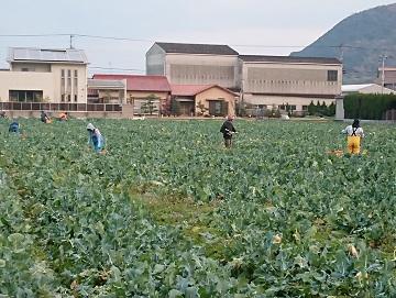 町川農園-7