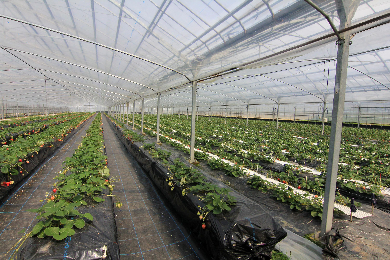 日本人が目指すべき食生活と農業の関係
