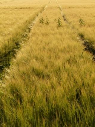 健康と食生活と農業