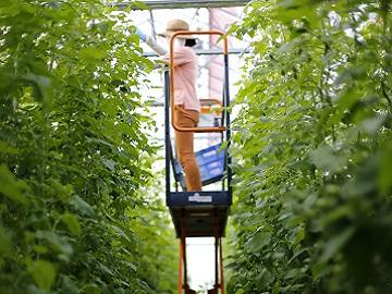 井出トマト農園-6