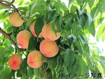 笛吹市×果樹・野菜/法人【6023】-1