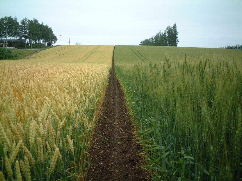現状の職業としての農業の問題点