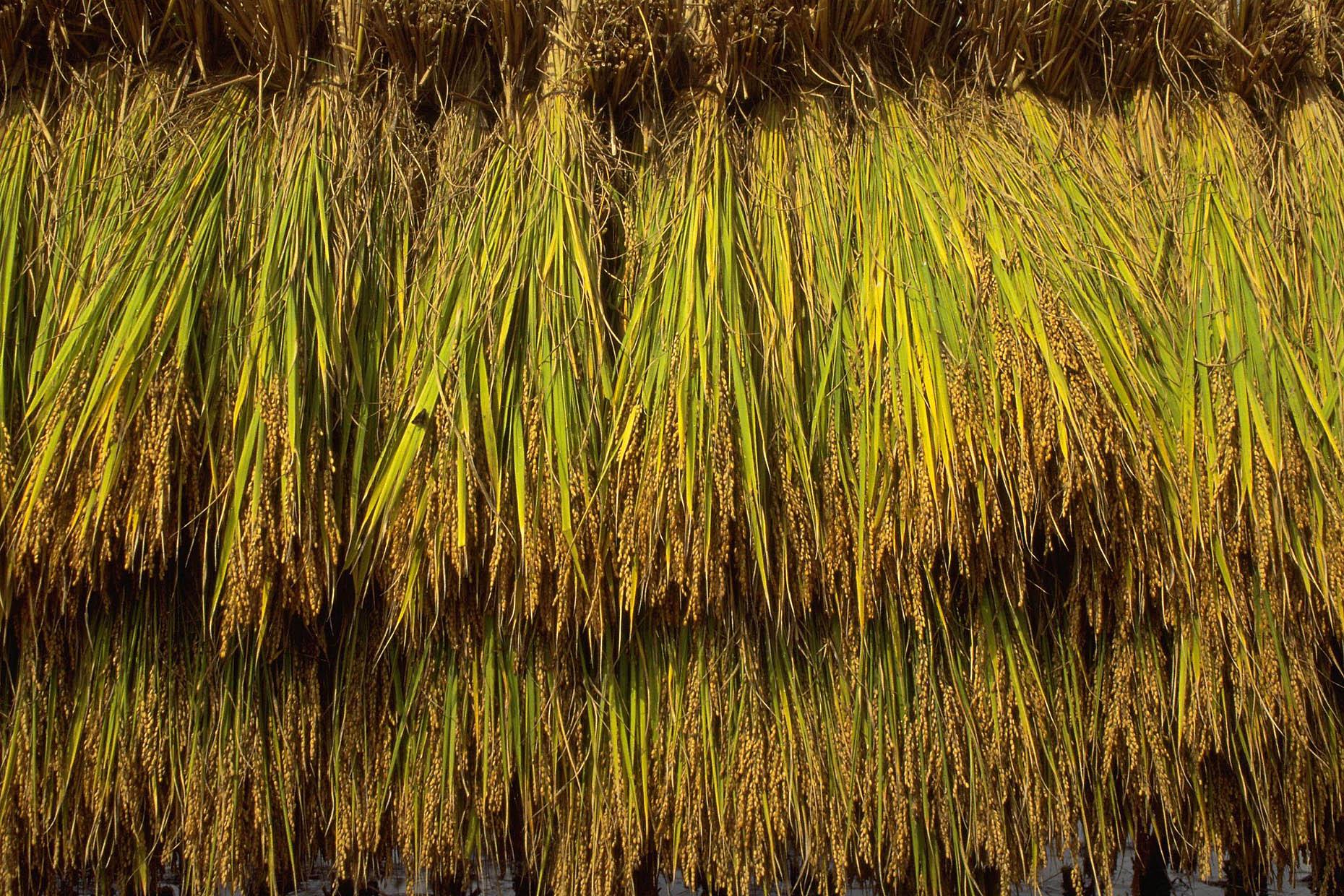 農林水産業のこれからの就労の可能性について
