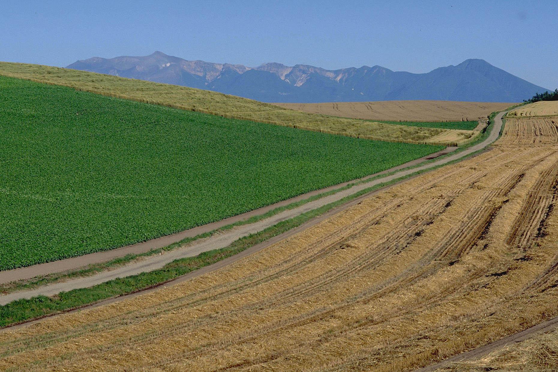 生産人口の減少と農業の合理化、技術革新とは?