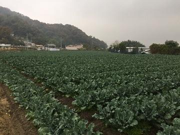 株式会社いしかわ農園-6