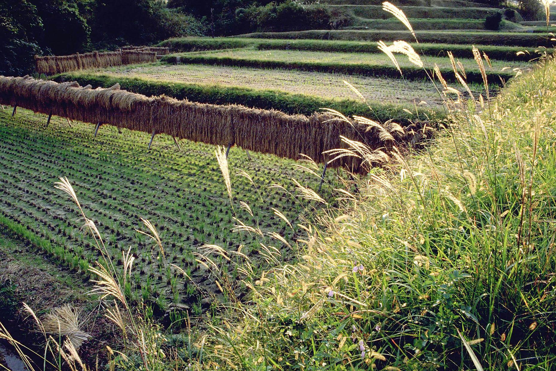人材という意味での、少子高齢化の農業への逆利用とは