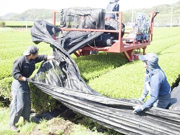 鹿児島堀口製茶有限会社-5