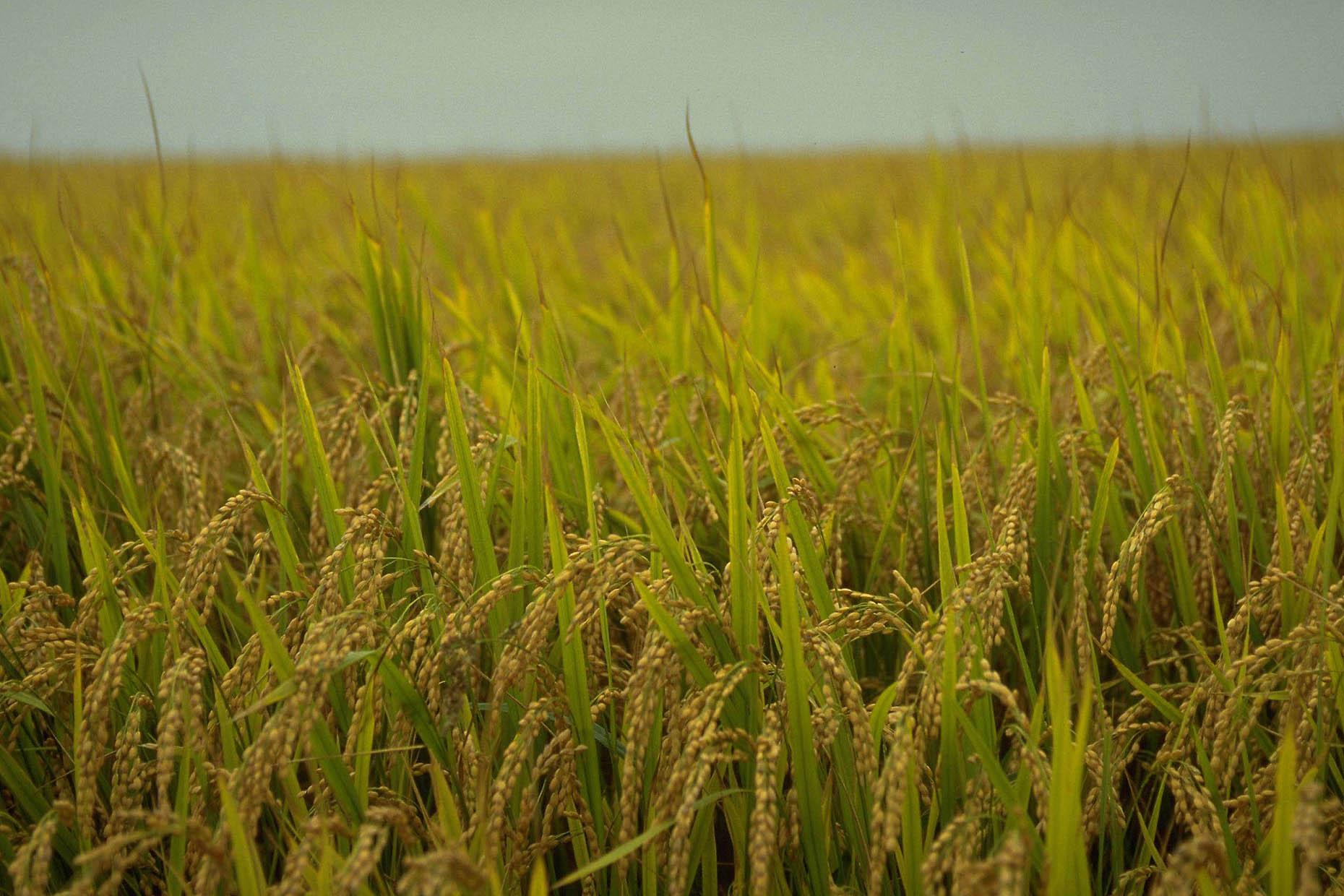 米国に見る農業の合理化と質