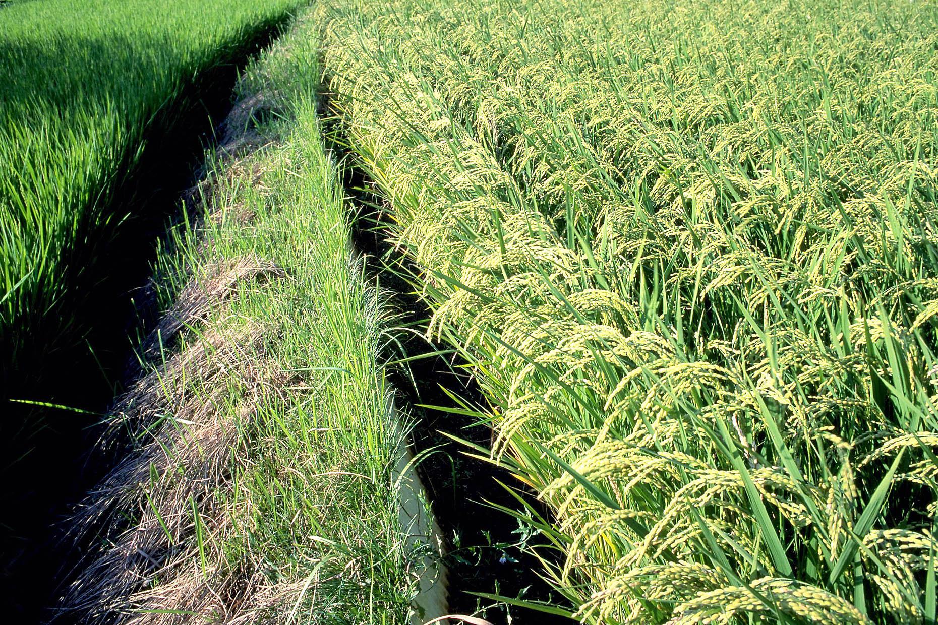 TPPに見る農業のグローバル化