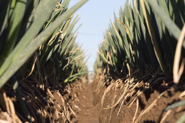 農業の大規模化と少子高齢化問題の逆利用