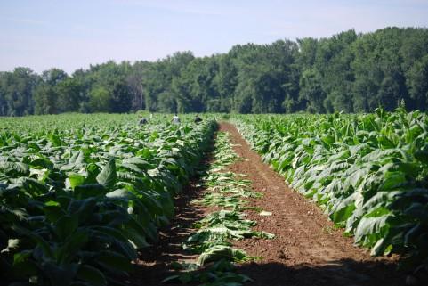 日本産農作物のブランディング戦略とは