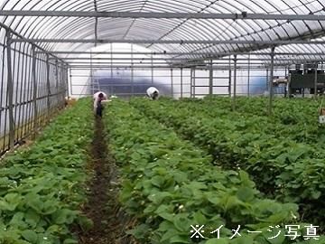 栃木県上三川町×施設野菜/個人【1572】-2